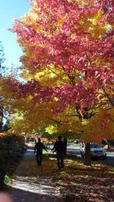 Fall colors and family