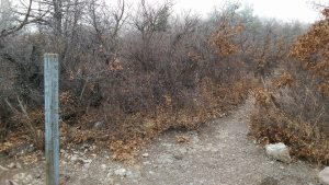 Sandia Crest Trail.